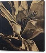Magnolia Blossom In Sepia Canvas Print