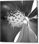 Magnolia Blossom - Photopower 2476 Bw Canvas Print