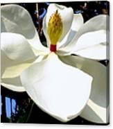 Magnolia Carousel Canvas Print