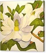 Magnolia Cluster Canvas Print