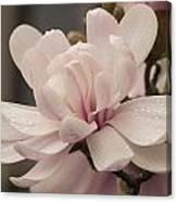 Magnolia Dream Canvas Print