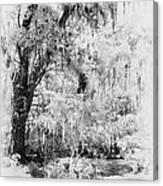 Magnolia Garden Path Canvas Print