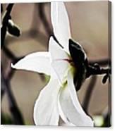 Magnolia In Profile Canvas Print