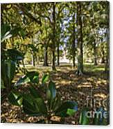 Magnolia Leaves Canvas Print