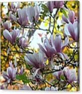 Magnolia Maidens In A Border Canvas Print
