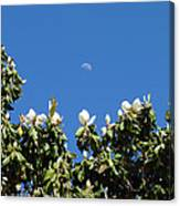 Magnolia Moon Canvas Print