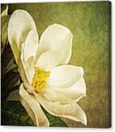 Magnolia Morning Canvas Print