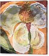 Magnolia Orioles Canvas Print