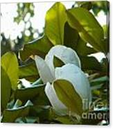 Magnolia Pair Canvas Print