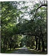 Magnolia Plantation Road Canvas Print