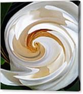 Magnolia Study No 1 Canvas Print
