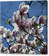 Magnolia Twig Canvas Print