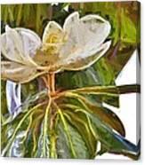 Magnolia White Canvas Print