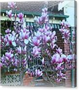 Magnolias At Home Canvas Print