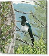 Magpie In Alaska Canvas Print