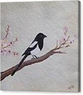 Magpie On Cherryblossm Tree Canvas Print