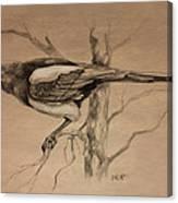 Magpie Sketch Canvas Print