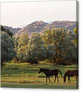 Magpies And Horses Canvas Print