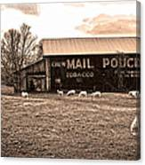 Mail Pouch Tobacco Barn And Sheep Canvas Print
