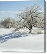 Maine Apple Trees Covered In Ice And Snow Canvas Print