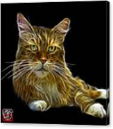 Maine Coon Cat - 3926 - Bb Canvas Print