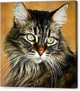 Maine Coon In Topaz Canvas Print