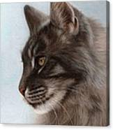 Maine Coon Painting Canvas Print