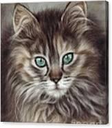 Maine Coon Canvas Print