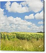 Maine Corn Field In Summer Photo Print Canvas Print