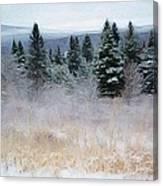 Maine Woods Canvas Print