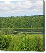 Mainely Green Canvas Print