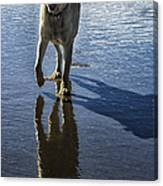 Maisie At The Beach Canvas Print