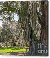 Majestic Live Oak Tree Canvas Print