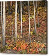 Majestic Autumn In The Grand Tetons Canvas Print