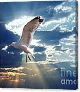 Majestic Bird Against Sunset Sky Canvas Print