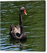 Majestic Black Swan Canvas Print