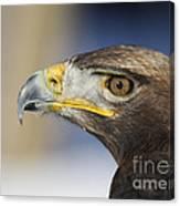 Majestic Golden Eagle Canvas Print