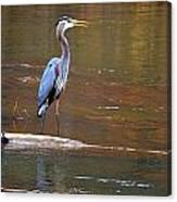 Majestic Heron Canvas Print