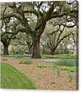 Majestic Live Oaks In Spring Canvas Print