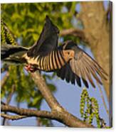 Majestic Mourning Dove  Canvas Print