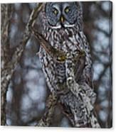 Majestic Owl Canvas Print