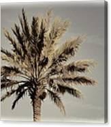 Majestic Palm Canvas Print