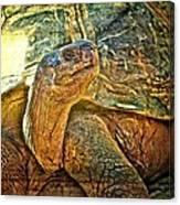 Majestic Tortoise Canvas Print