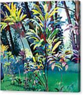Makawao Peacock Canvas Print