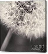 make a wish III Canvas Print