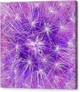 Make A Wish In Purple Canvas Print