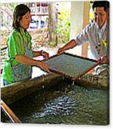 Making Paper Using Mulberry Tree Pulp At Boring Paper Factory In Chiand Mai-thailand Canvas Print