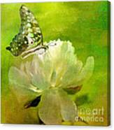 Malachite On Peony Canvas Print