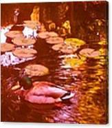 Malard Duck On Pond 3 Canvas Print