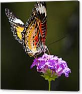 Malay Lacewing On A Flower  Canvas Print